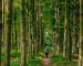 Plantar 6 árboles al mes por persona compensaría las emisiones de CO2: Tree-Nation
